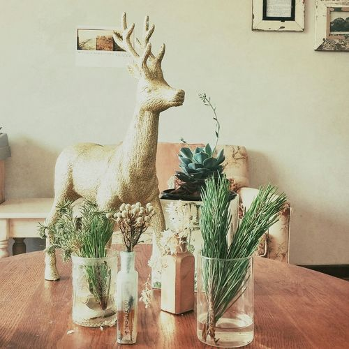 A new addition to my lounge. Reindeer Design Plants Decor Lounge Home Interior Greenery Feelingathome Feeling At Home