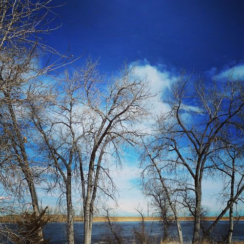 Wintertime Blue