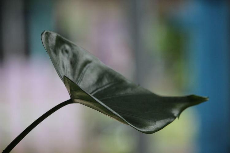 Close-up of lizard on leaf