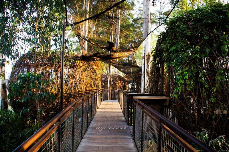 Hello World Check This Out Enjoying Life Hanging Out at Dusun Bambu Bandung, West Java Bandungjuara EyeEm Nature Lover Photography