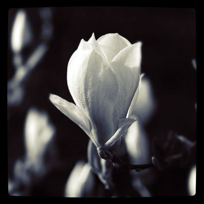 magnoliaday Flower Lobostudio Lobo_flowers