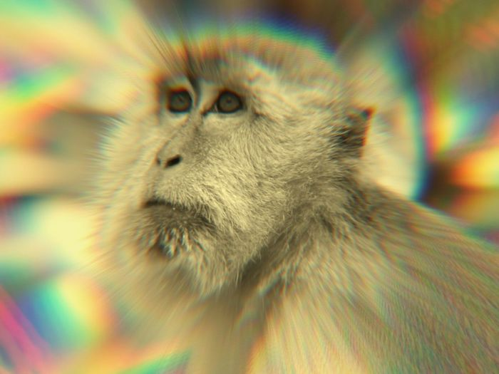 Warping The World Monkey Photoart Photoarteffects Effects & Filters Playing With Filters Artistic Freedom Artistic Eye EyeEm Best Shots Make You Giddy A Different Point Of View A Different View A Different Perspective Eyeemphotography Playing With Effects Three D Artistic Edit Photoartwork Artistcollection Print From Photo Artisticphoto My Warped World Artistic Expression Pivotal IdeasEdited This filter is weird...gives an almost 3 dimentional image..dont stare too long it will make you giddy!...stilll i love it