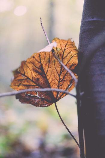 Autumn Color Day Forrest Her Jahreszeit Jahreszeiten Mushroom Natur Nature Nature No People Outdoors