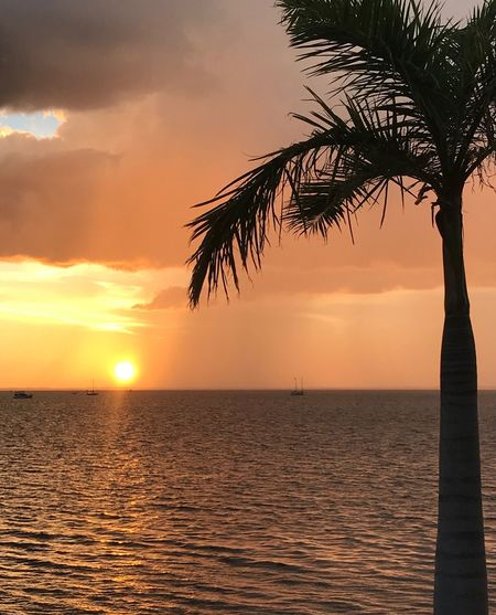 Sunset Sky Sea Water Beauty In Nature Scenics - Nature Tranquility Tree Tranquil Scene Horizon Over Water Orange Color Horizon Nature Cloud - Sky Palm Tree Idyllic Plant Silhouette Outdoors No People