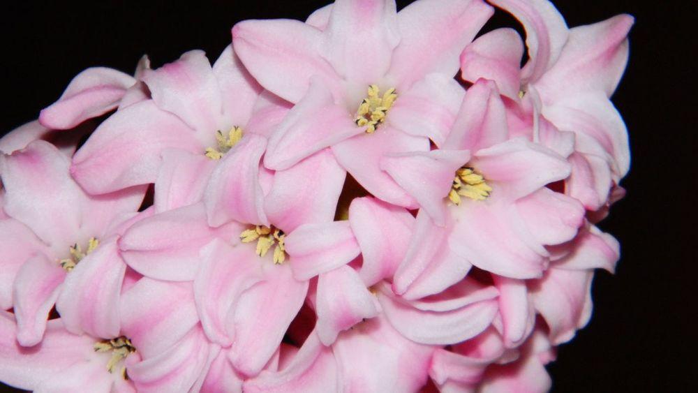 Pastel Power Flower Power🌼 Easter Ready