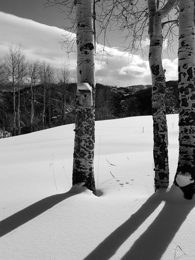 winter in the rocky mountains Bird House Snow Day Rocky Mountains Colorado Winter Shadow Day Sunlight Snow Outdoors No People Sky Winter Cold Temperature Tree