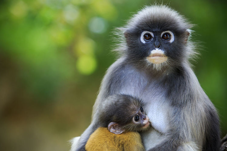 Close-up of monkeys in forest