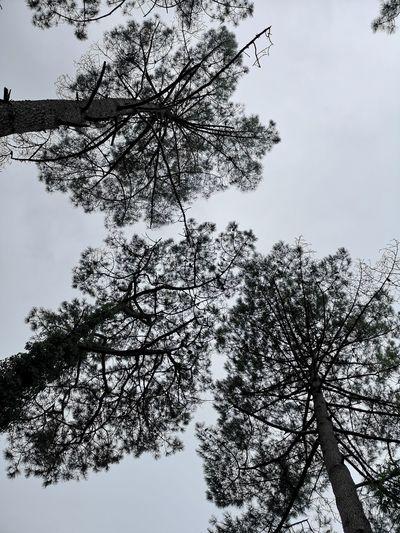 Bird Tree Branch Flock Of Birds Sky Animal Themes Close-up Silhouette Single Tree Bare Tree Scenics