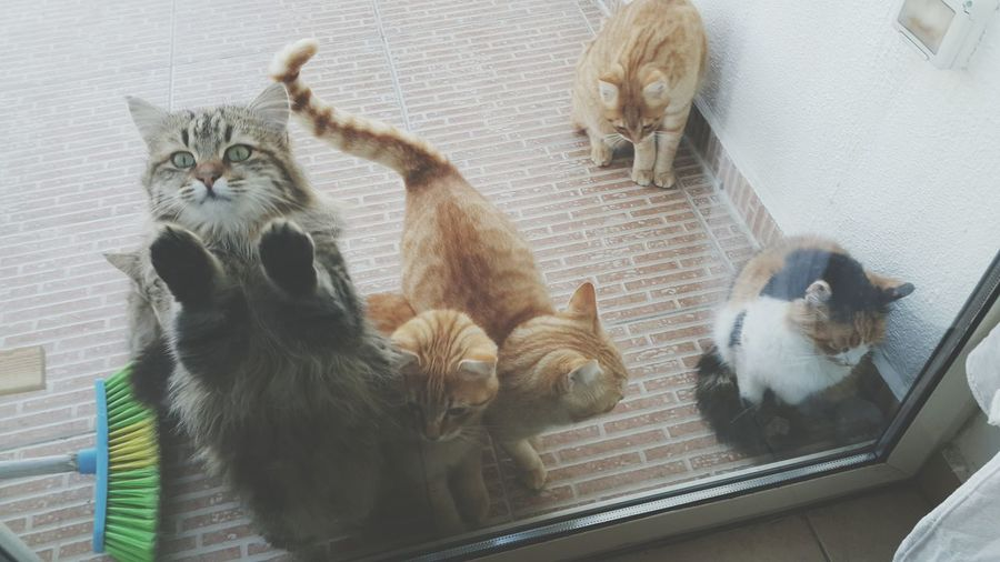 High angle view of cats sitting by door at home