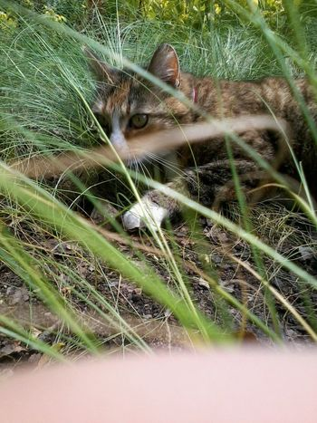 Archive 2014 Hunter Made Not Even With Iphone Grass No Effects No People Cat Feline One Animal Plant Portrait Mammal Pets Domestic Domestic Animals Domestic Cat Day Growth Nature Whisker