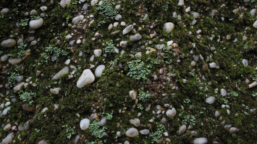 Backgrounds Bark Texture Beauty In Nature Fall Color Fall Colors Full Frame Grassy Nature Nature Nature Photography No People Outdoors Pebbles Rocks Textures And Surfaces Trees Trees And Sky
