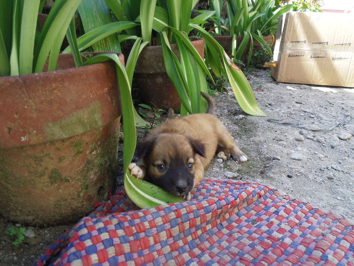 Portrait of puppy relaxing on plant