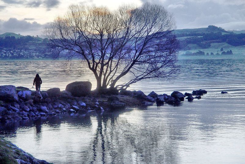 Lake Taupo New Zealand Morning New Zealand Scenery Lake Tree Misty Cold The Moment - 2015 EyeEm Awards