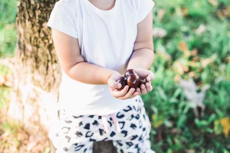 Midsection of girl holding chestnuts while standing outdoors