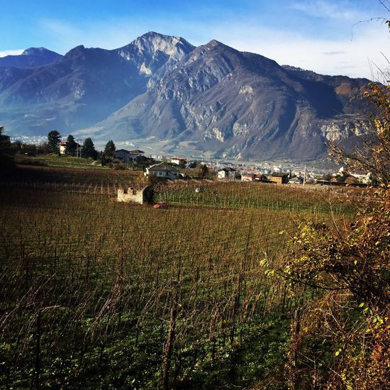 Trentino Alto Adige Trento Wineyard Alps Mountains Rural Rural Scenes Landscape Square Agriculture Povo Italy Italia Vineyard Vinyard Field Autumn Autumn Colors
