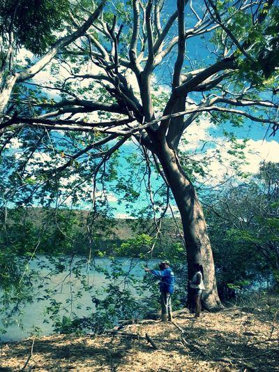 Pai Arvore Rio Parnaiba Piauí Amarante Tree River Dad