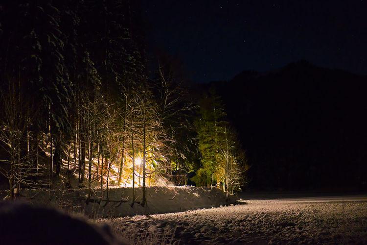 Illuminated trees on field against sky at night