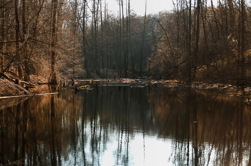 Springtime Forest Lake Reflection Tree Water Tranquility Forest Waterfront Plant Lake Tranquil Scene Beauty In Nature Nature Scenics - Nature No People Day Non-urban Scene Bare Tree Land WoodLand Outdoors Reflection Lake Flooded Ecology Problem Environment