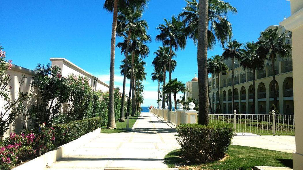 Punto de fuga Palm Riu Hotel Loscabossanlucas BCS Freedom Sky Day Blue No People Clear Sky