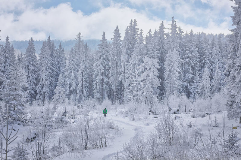 A man explores snow covered land and trees in forest in vitosha mountain, bulgaria