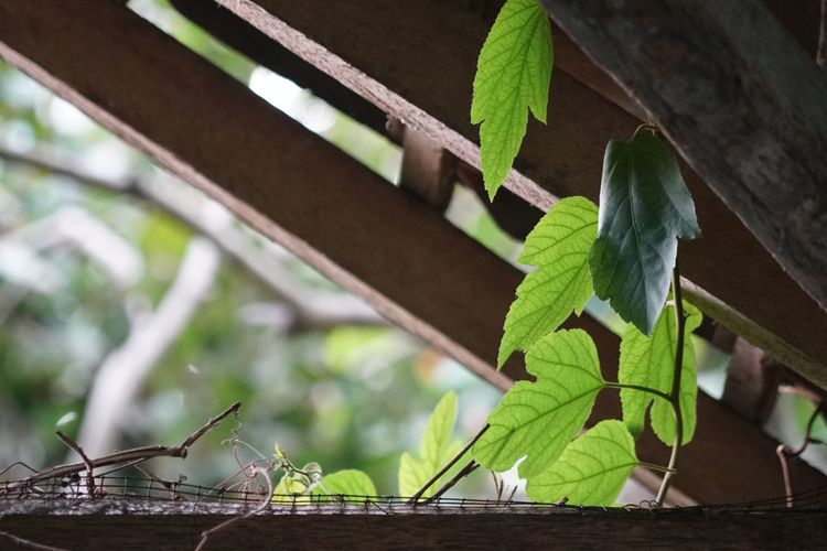 Leaves Leaf Plant Part Green Color Plant Nature Growth No People Architecture Animal Wood - Material Animals In The Wild One Animal Animal Wildlife Invertebrate Close-up Focus On Foreground Animal Themes Outdoors Day Built Structure