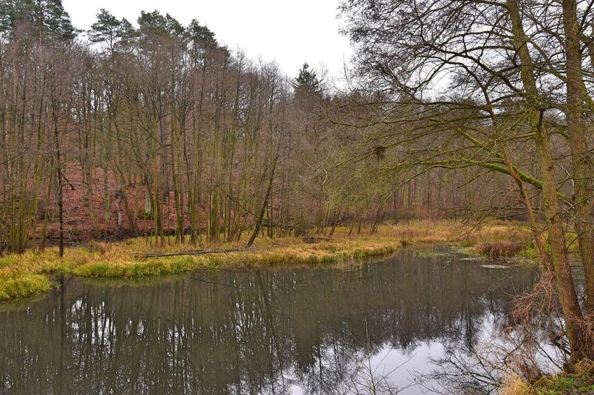 Nature Photography Nonnenfließ Schwärzetal Spechthausen Autumn Bare Tree Beauty In Nature Day Forest Grass Lake Landscape Nature Nature_collection Naturelovers No People Outdoors Reflection Scenics Sky Stream Tranquil Scene Tranquility Tree Water