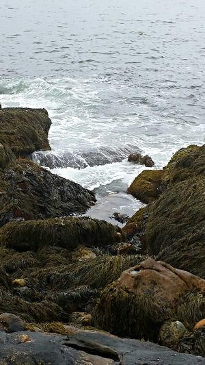 Reid State Park Mainephotography Atlantic Ocean Ocean View Rocks And Water The Tide Eyeemnaturelover Enjoying Life Taking Photos EyeEm Best Shots