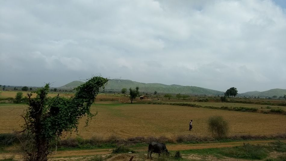 The Dragon And The Sleeping Lady Dragon Lady Agriculture Field Rural Scene Cloud - Sky Outdoors Tree Mystic Rural Scenes Indiapictures India Rural People भारत