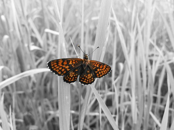 Black And White With A Splash Of Colour Buterfly 🌺🌺🌺 Buterfly🌸 Buterfly Of EyeEm The Great Outdoors - 2017 EyeEm Awards Eye4photography  Capture The Moment EyeEm Gallery EyeEm Masterclass EyeEmBestPics Outdoors EyEmNewHere Outdoor Photography Close-up Getting Inspired Best Of EyeEm My Unique Style Nature EyeEm Nature Lover EyeEm Nature Photography EyeEm Nature Collection Amazing View Amazing_captures EyeEm Best Shots Something Different