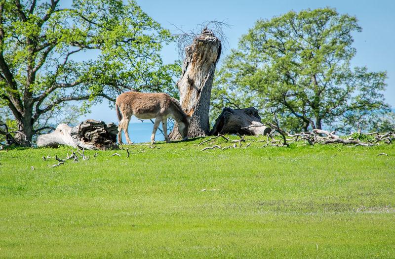 Donkey on grassy field