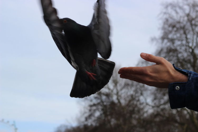Cropped image of hand releasing pigeon against sky