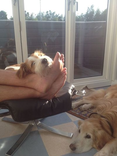 Summer Stopping Time Kromfohrlander Peaceful Nap