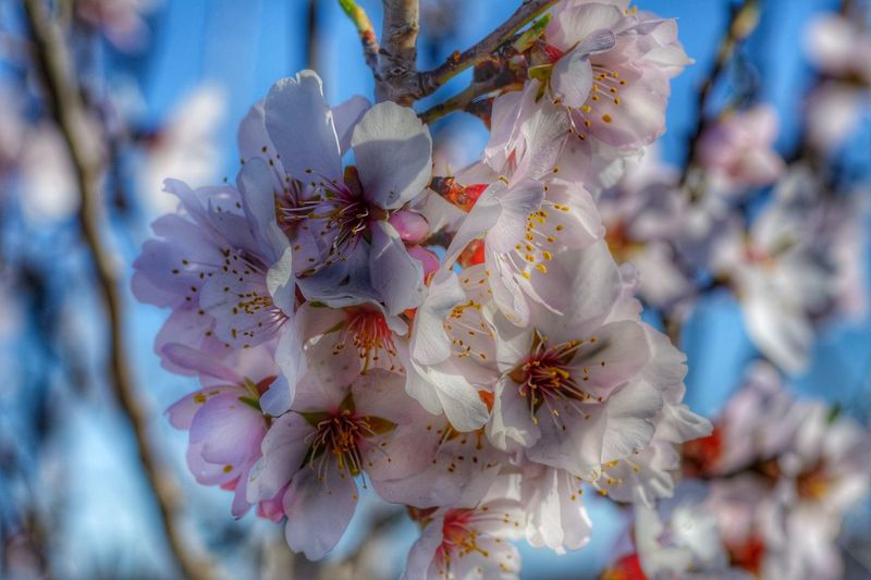 Flowers Blossom Trees Beautiful Nature Photography Taking Photos
