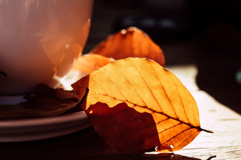 Autumn coffee Autumn Autumn Leafs Beverage Caffeine Hanging Out Nature Wooden Table Close-up Coffe Coffee Cup Coffee Outside Day Empty Cup Freshness No People Seasonal EyeEmNewHere