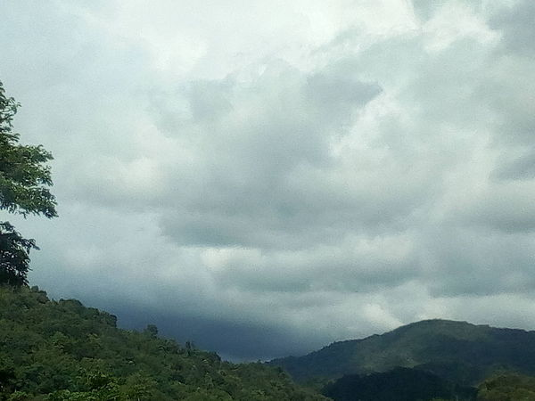 Tree Mountain Storm Cloud Forest Sky Cloud - Sky