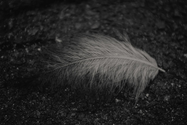 Beautiful Beautiful Nature Beauty In Nature Black & White Black And White Blackandwhite Close-up Darkness And Light Delicate Delicate Beauty Feather  Feathers Fragile Fragility Macro Monochrome Monochrome Photography Nature No People On The Ground Outdoor Photography Outdoors Softness Streetphotography Welcome To Black