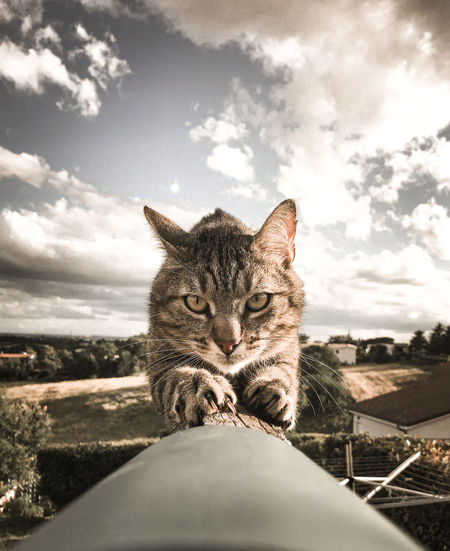 Portrait of cat by sea against sky