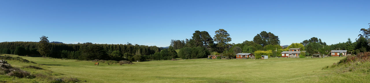 Panoramic view of trees on field against clear blue sky