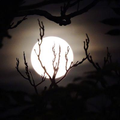 Rami in controluna 🌙 Moon Luna Italia Italy EyeEm Best Shots EyeEmBestPics