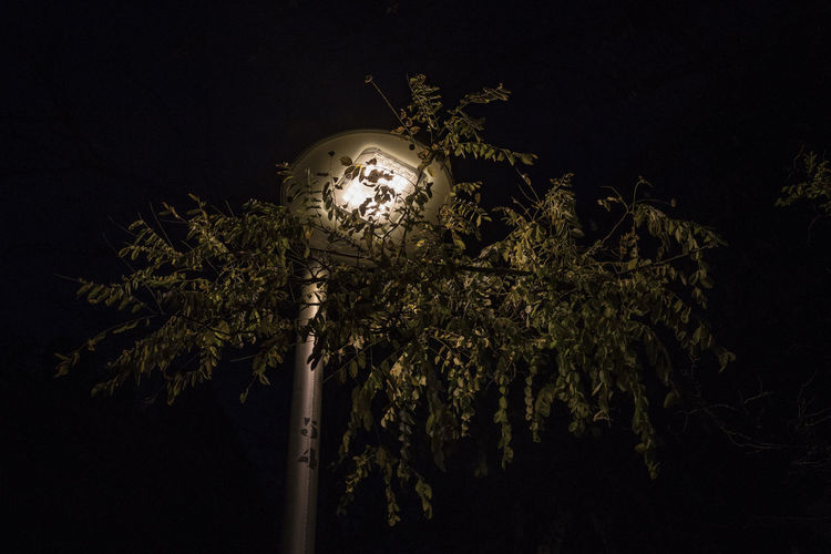 Low angle view of illuminated lights against trees at night