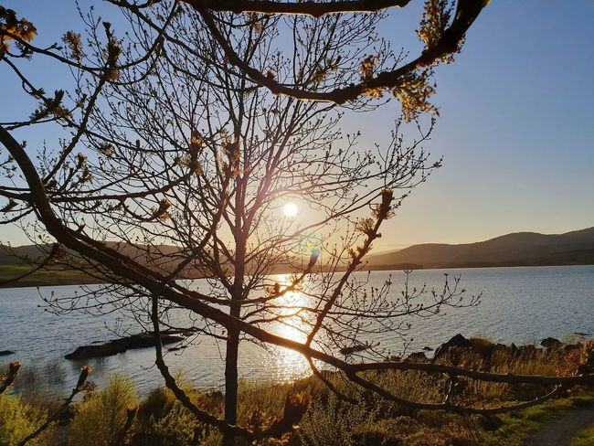 Scottish Sunset Loch from Clattering shores , Dumfries and Galloway Loch  Clatteringshaws Dumfries And Galloway Dumfries Sightseeing, Scotland Lochs Peace Peacful Relaxing Sunset Sunset Collection Taking Photos Taking Pictures Tree Water Sunset Sea Branch Mountain Silhouette Sky Landscape Foreground Shining Horizon Over Water Shore Sunbeam Calm Sun Idyllic