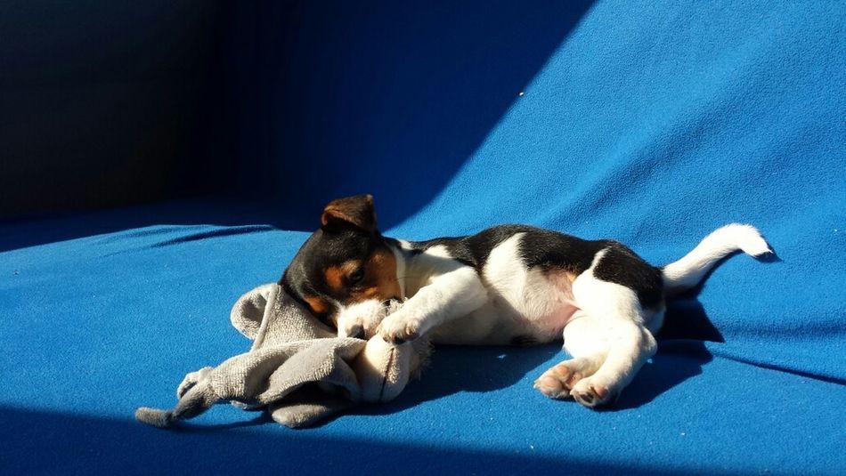 Mein Baby Luna ♡ Hundewelpen Welpe Mein Hund Babydog