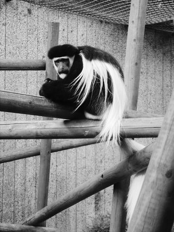 Zoo Animal Zoo Animal PhotographyZooanimals ZOO-PHOTO Zoophotography Zoo Animals  Animals Animal Monkey