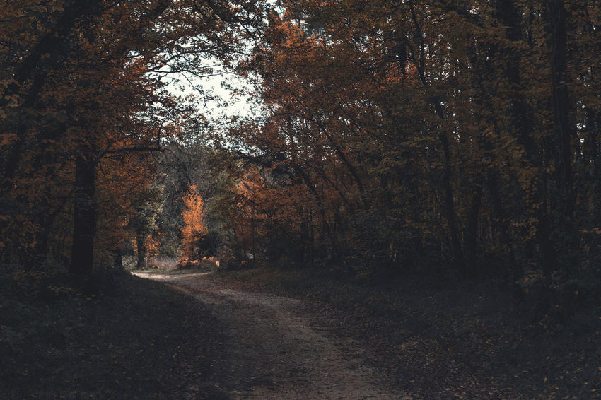 Tree Direction Plant Forest The Way Forward Land Road Tranquility Nature Growth Transportation No People Beauty In Nature Day Non-urban Scene Tranquil Scene Autumn Outdoors Dirt Road WoodLand Change