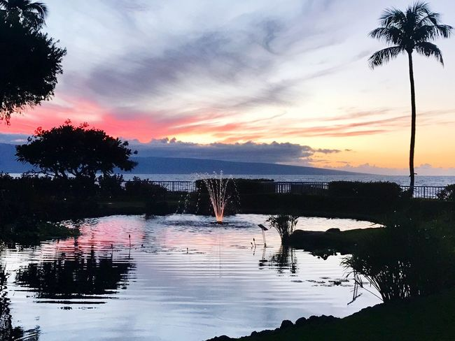 Maui, Hawaii Maui Pond EyeEm Nature Lover Sunset Silhouettes Sunset_collection Sunset Colorful Sky Water Tree Sunset Sky Reflection Beauty In Nature Scenics Cloud - Sky Nature Tranquil Scene Outdoors Silhouette No People