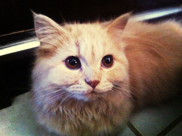 Nino ♡ Cat