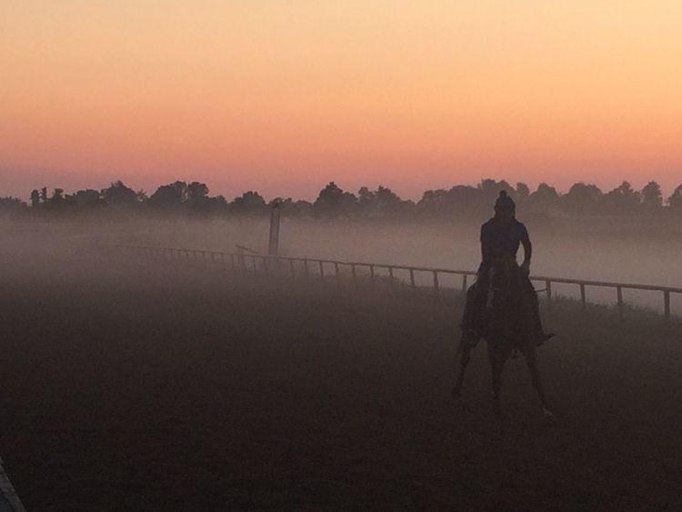 Morning workouts (no filter) Horse Race Racetrack Animal Lexington Kentucky  KentuckyDerby Thoroughbred Nofilter