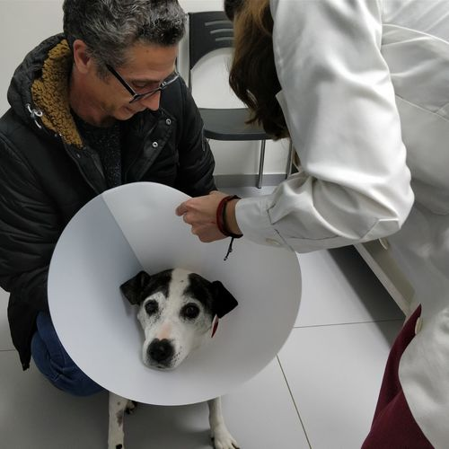 Doctor Putting Cone Collar To Dog At Hospital