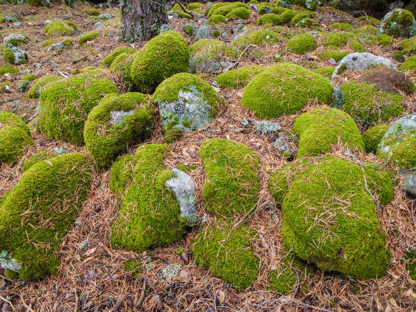 Beauty In Nature Field Green Color Growth Land Moss Nature No People Plant Rock Scenics - Nature Tranquil Scene Tranquility Tree
