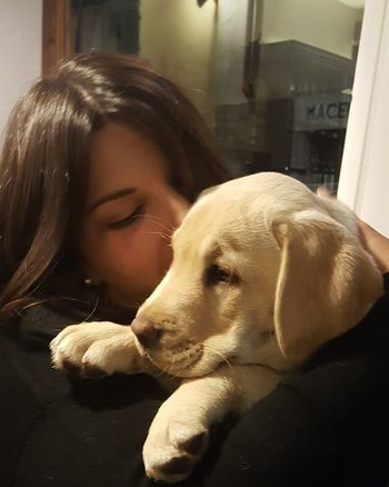 Byron! Dog Pets One Animal Only Women One Person Domestic Animals Mammal Real People Friendship Indoors  Puppy Dog Puppylove 😘😍🐶 Puppy Photography Puppylife LabradorLove LabradorPuppy Women Love ♥ HugsAndKisses Puppy Hugs